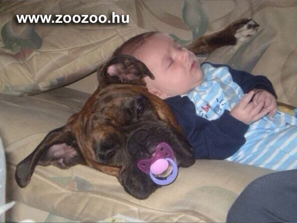 kutya, gyerek