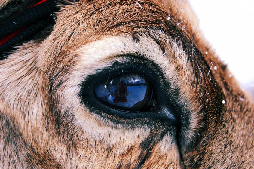 miért más a szemük látása