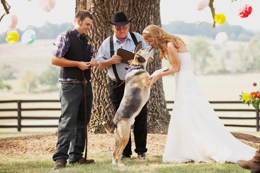 kutya, esküvő
