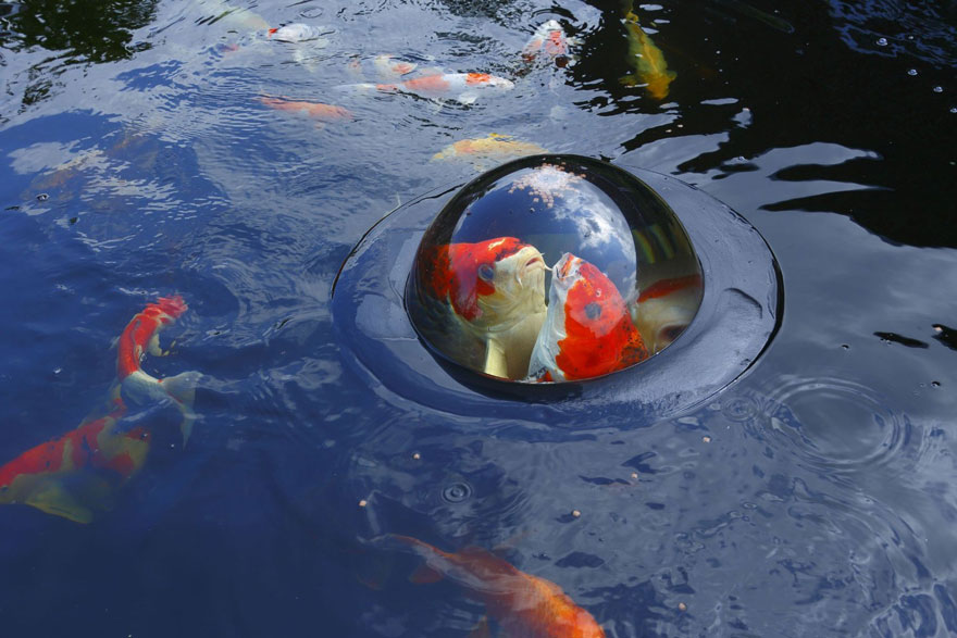 floating-fish-dome-out-of-water-velda-4