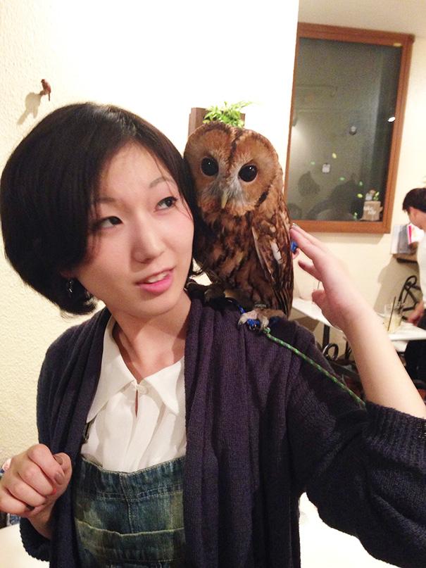 owl-cafe-ikefukuroucafe-tokyo-13