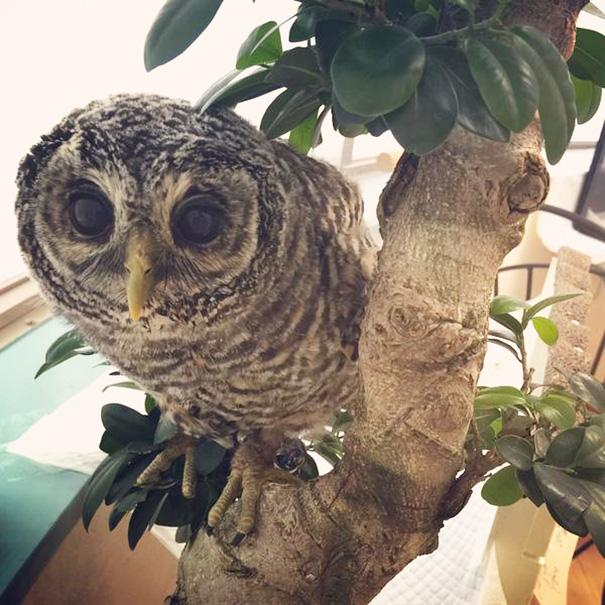 owl-cafe-ikefukuroucafe-tokyo-5