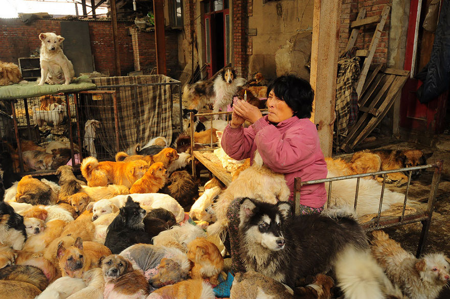 rescued-dogs-yulin-dog-meat-festival-china-2