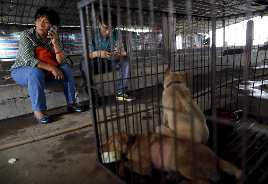 rescued-dogs-yulin-dog-meat-festival-china-21