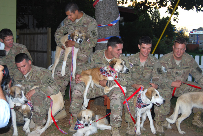 sheba-puppies-reunion-soldiers-afghanistan