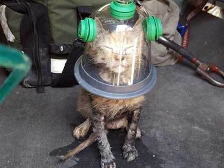 Cat-in-Oxygen-Mask1