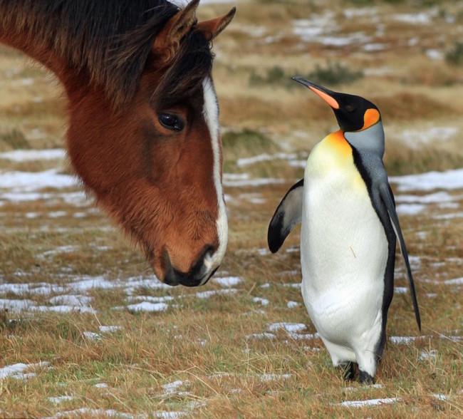 Horse-penguin-650x588