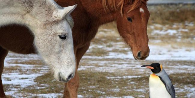 Peng-horse-650x328