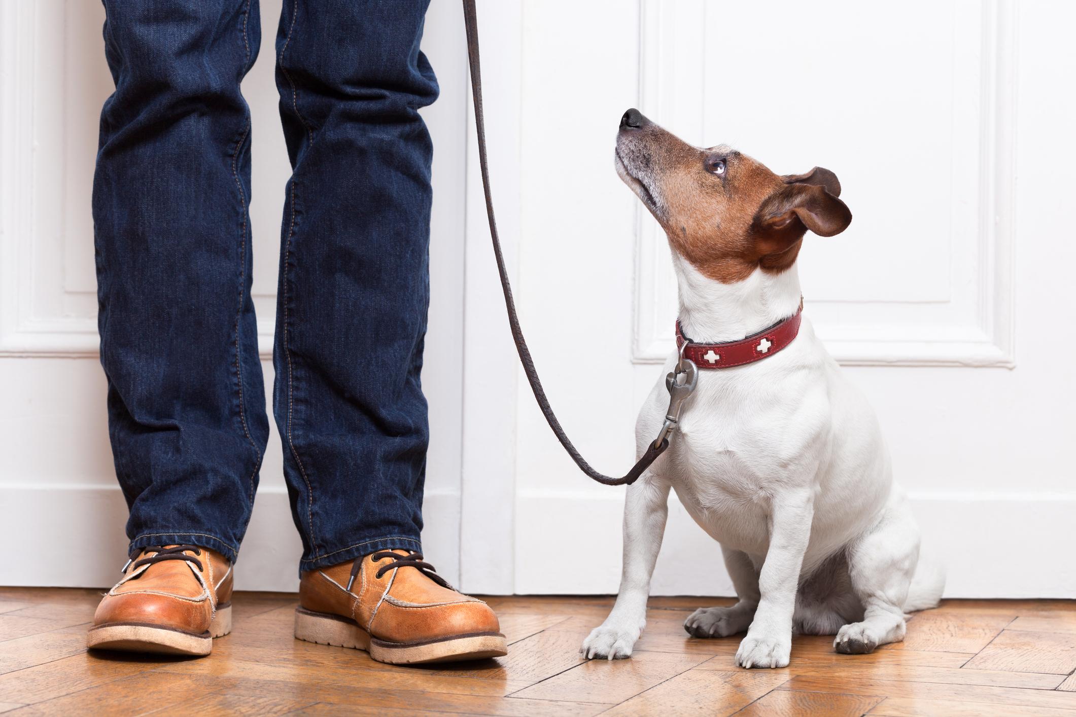 dog-walk_35537869