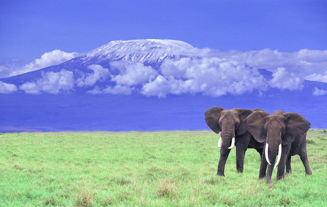 Kilimanjaro National Park, Tanzania --- African Elephants near Mount Kilimanjaro --- Image by © DLILLC/Corbis