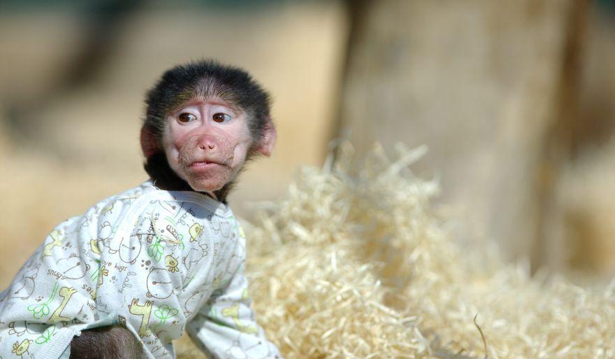 Monkey-LUKA5__880