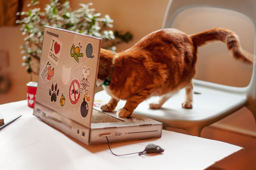 cat-scratch-laptop-toy-suckuk-6
