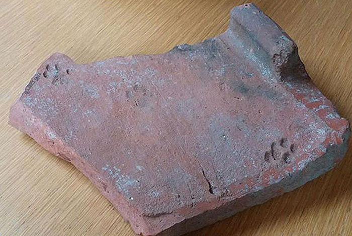 clay-paw-print-cat-roman-tile-gloucestershire-1