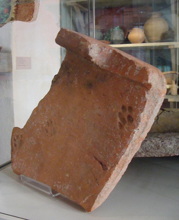 clay-paw-print-cat-roman-tile-gloucestershire-4