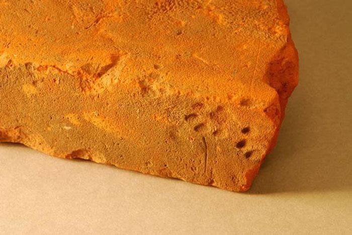 clay-paw-print-cat-roman-tile-gloucestershire-5