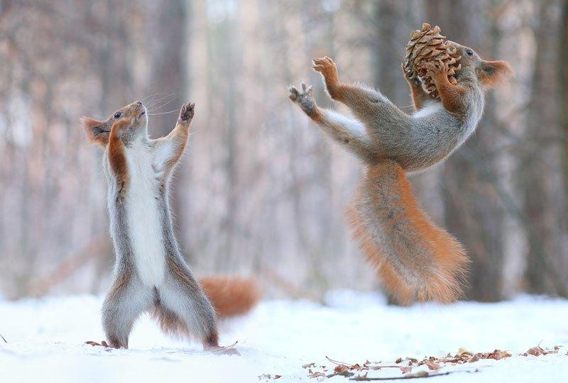 A hóban játszó mókusoknál ma már nem lesz cukibb | ZooZoo Portál
