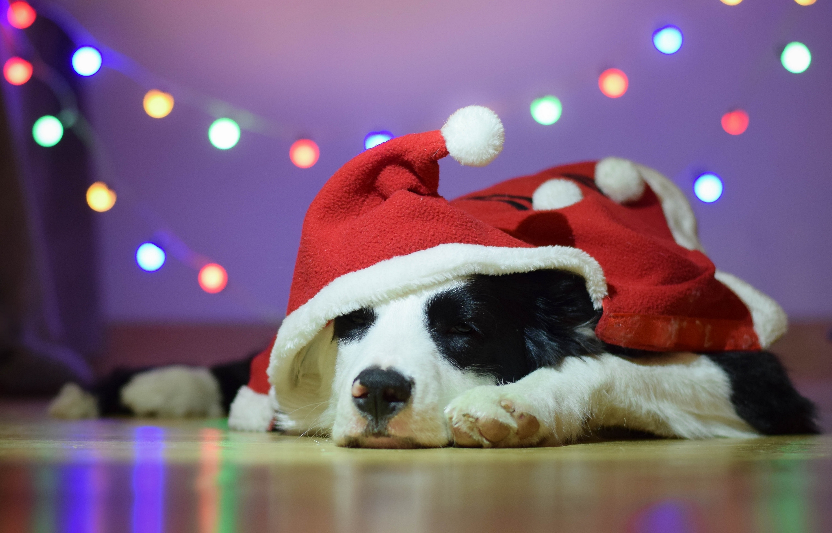 Dogs_Christmas_Border_459360