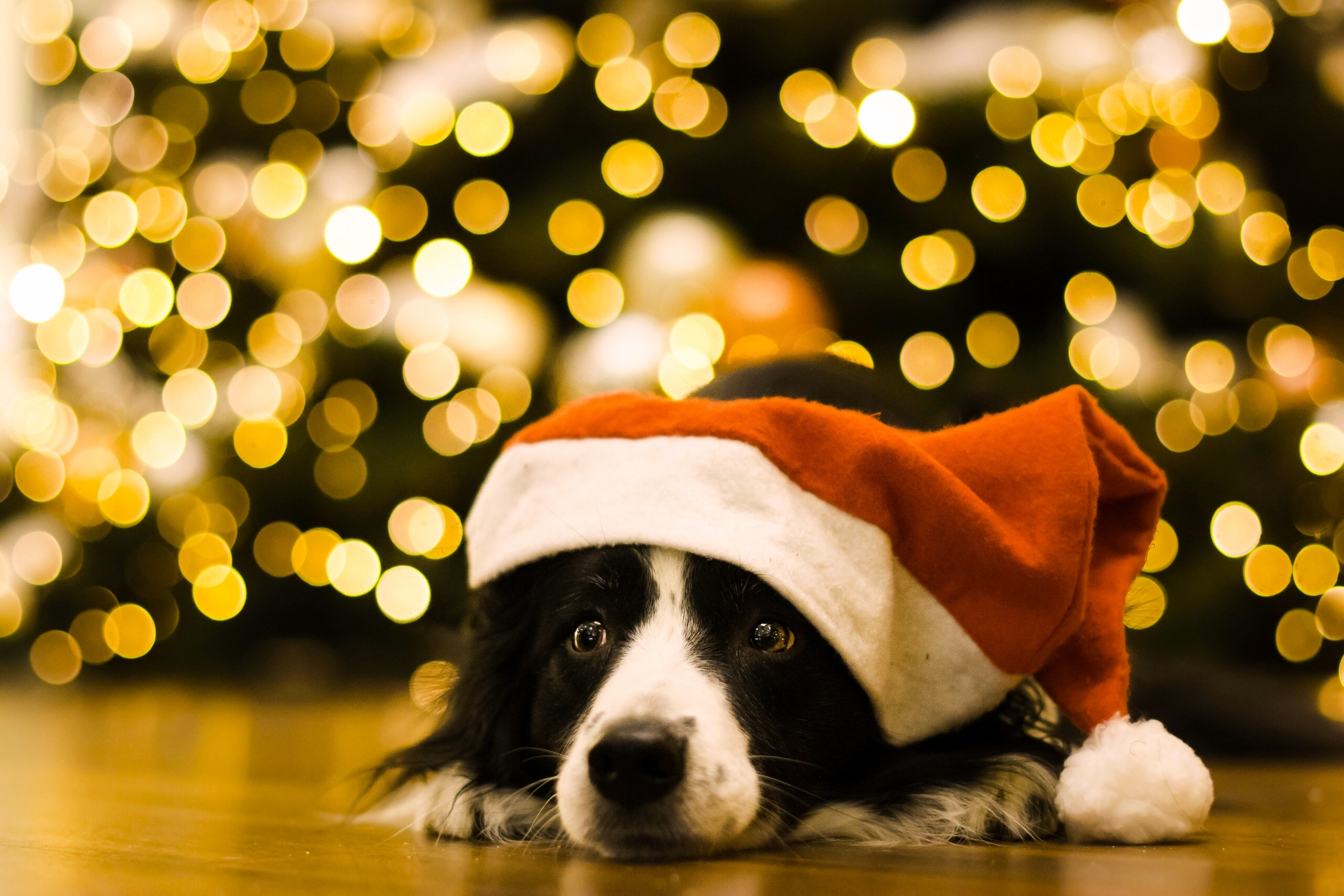 Dogs_Christmas_Border_461906