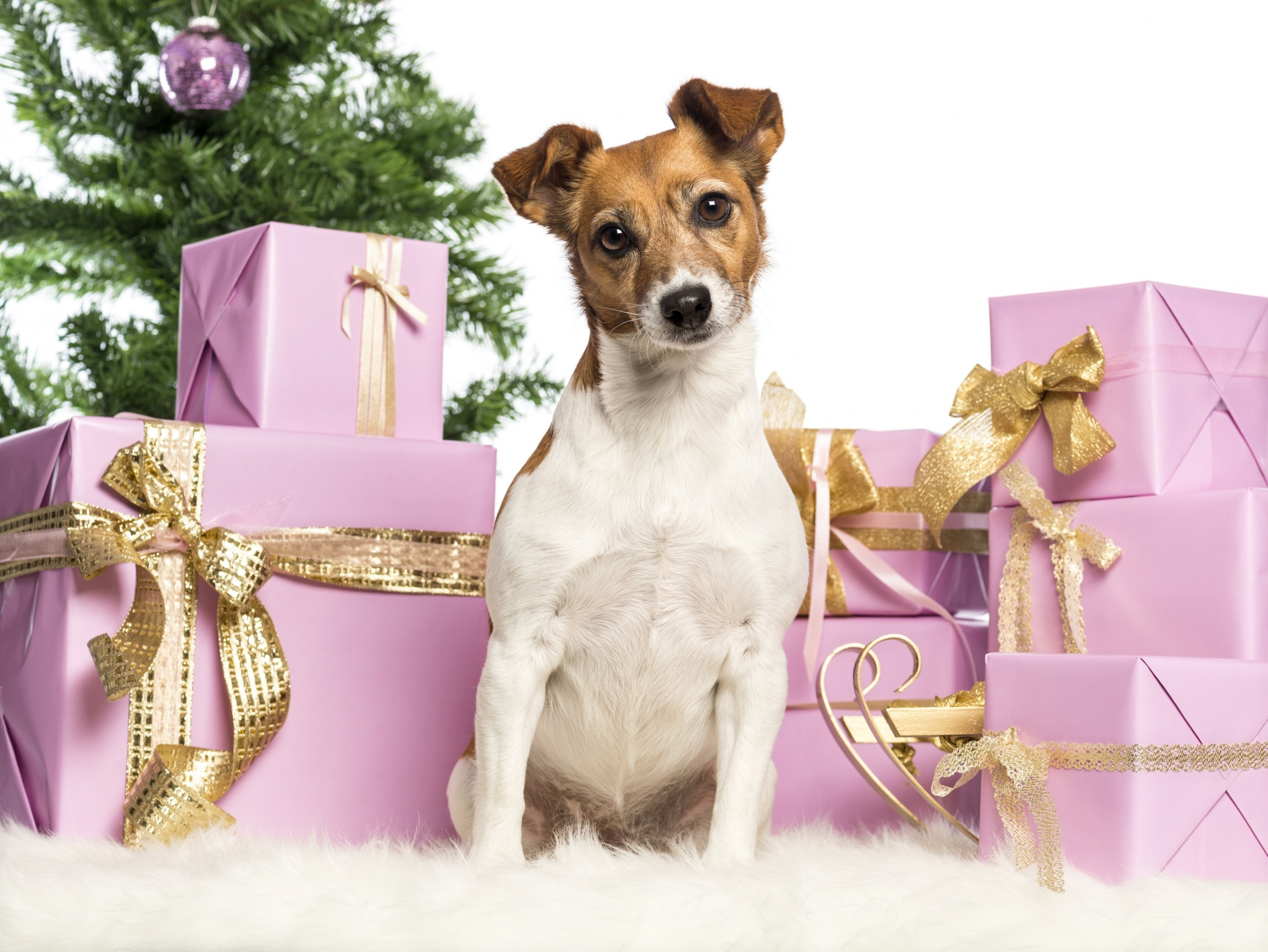 Dogs_Christmas_Gifts_361044