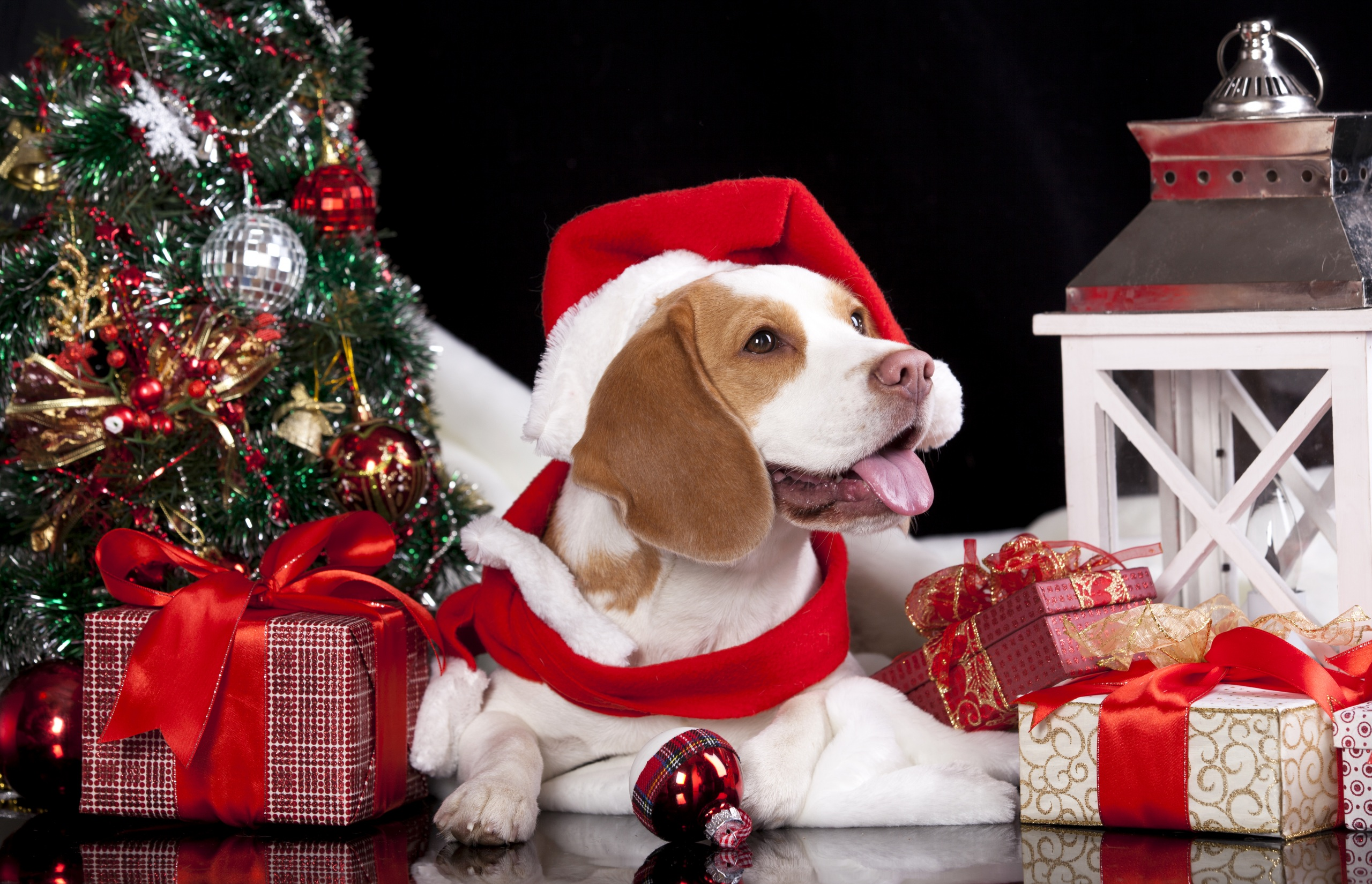 Dogs_Holidays_Christmas_458573