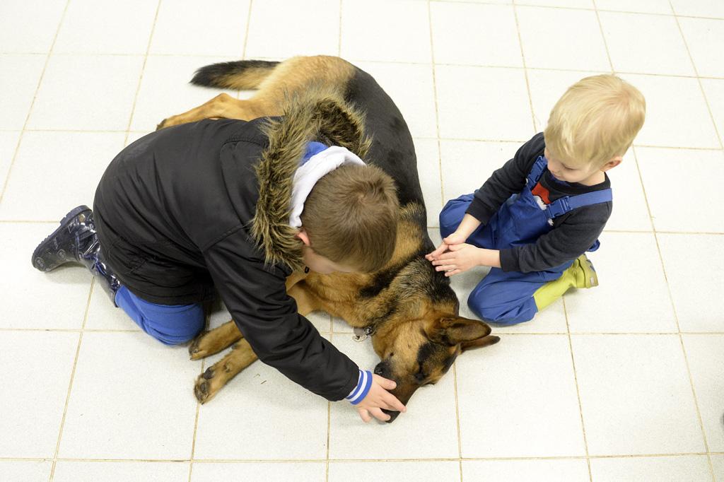 Budapest, 2016. február 10. Gyerekek játszanak Rexszel, Varga Károly gyermekorvos kutyájával az óbudai Ányos utcai gyermekorvosi rendelőben 2016. február 10-én. A terápiás minősítéssel rendelkező német juhász minden rendelésre elkíséri gazdáját, ahol neki is szerepe van, megnyugtatja a gyerekeket, leköti a figyelmüket. MTI Fotó: Kovács Tamás