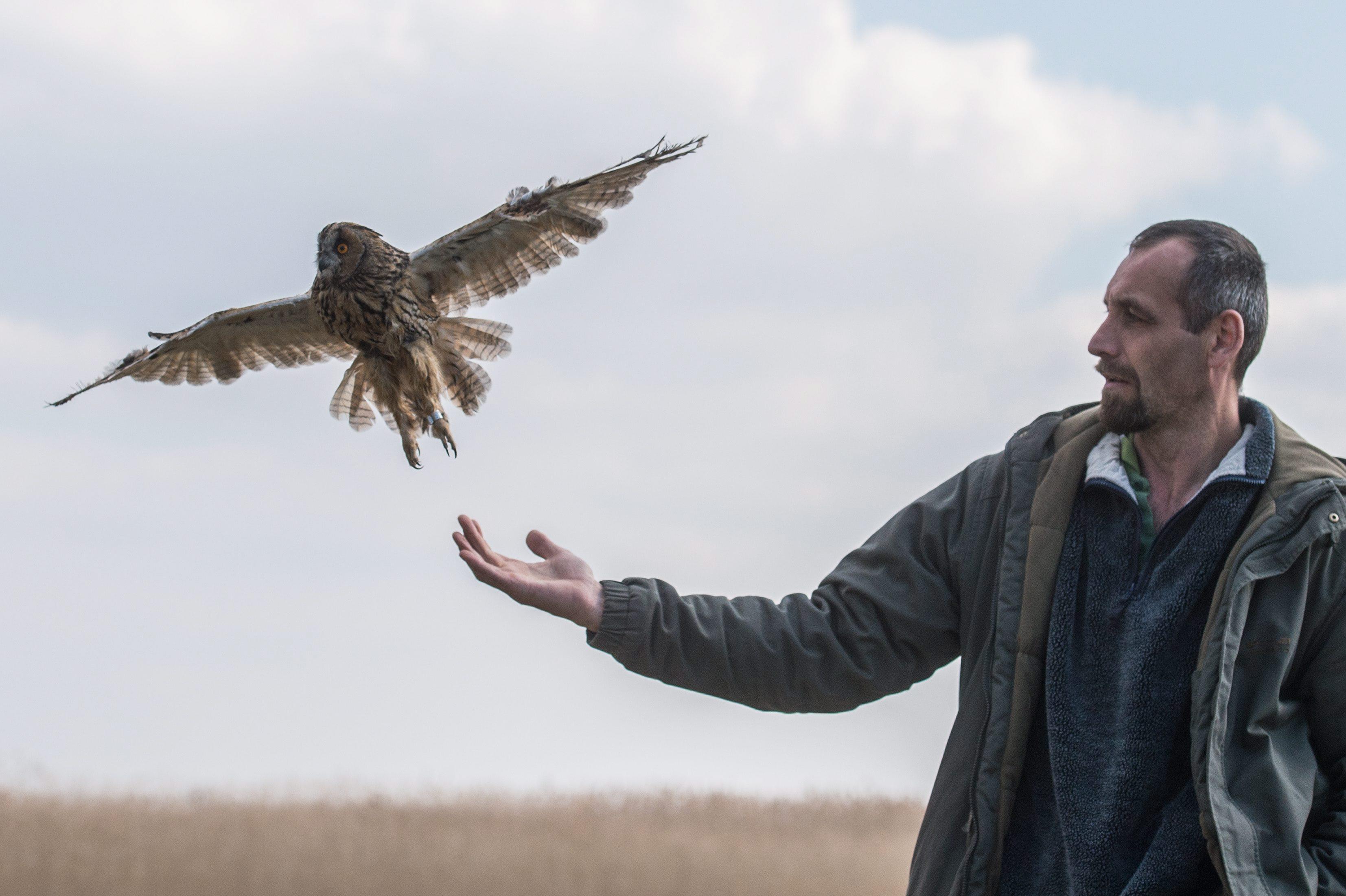Izsák, 2016. március 17. Németh Ákos, a Kolon-tavi madárvárta vezetõje egy fülesbaglyot enged szabadon Izsák határában 2016. március 17-én. MTI Fotó: Ujvári Sándor