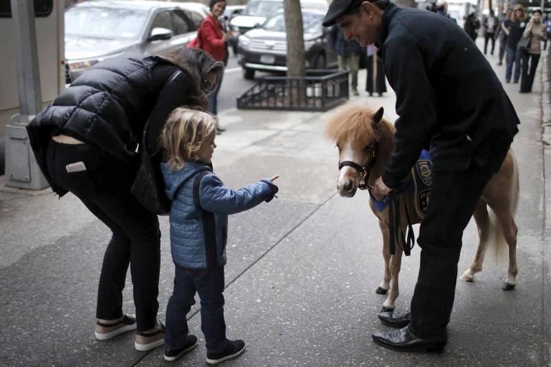 Handler Jorge Garcia-Bengochea holds Honor, a miniature therapy horse from Gentle Carousel Miniature Therapy Horses, as they are greeted by a child outside Kravis Children's Hospital at Mount Sinai in the Manhattan borough of New York City, March 16, 2016. REUTERS/Mike Segar
